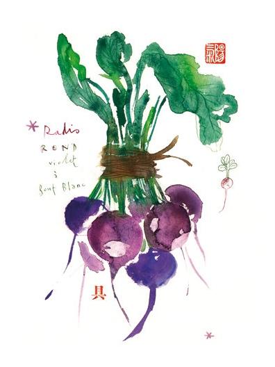Lucile Prache - Radish