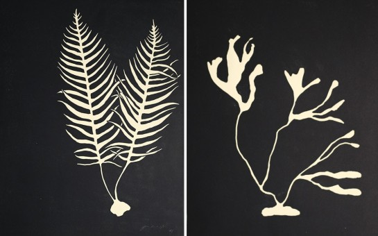 Underwater Plantlife - Jennifer Ament